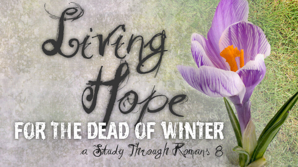 Living Hope for the Dead of Winter